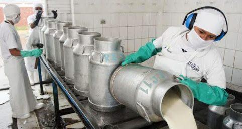 productores de leche vaciando producto