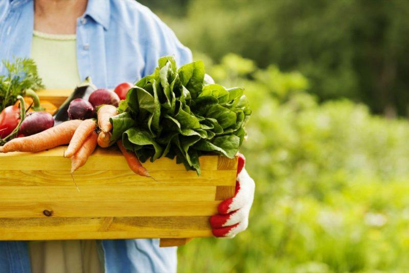 Mujer cosechando vegetales